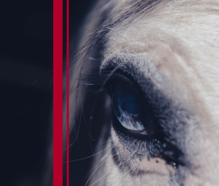 horse eye two